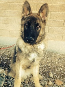 Obedience Pet Dog Training in Tucson Arizona