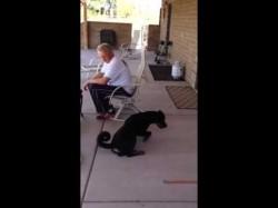 Dog Training Tip