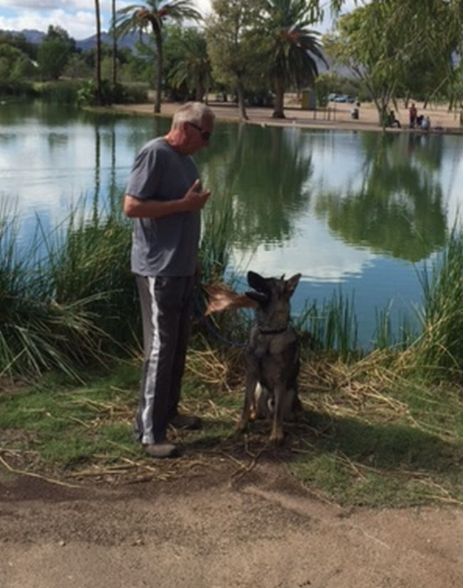 Sven trained Protection dog sold in LV