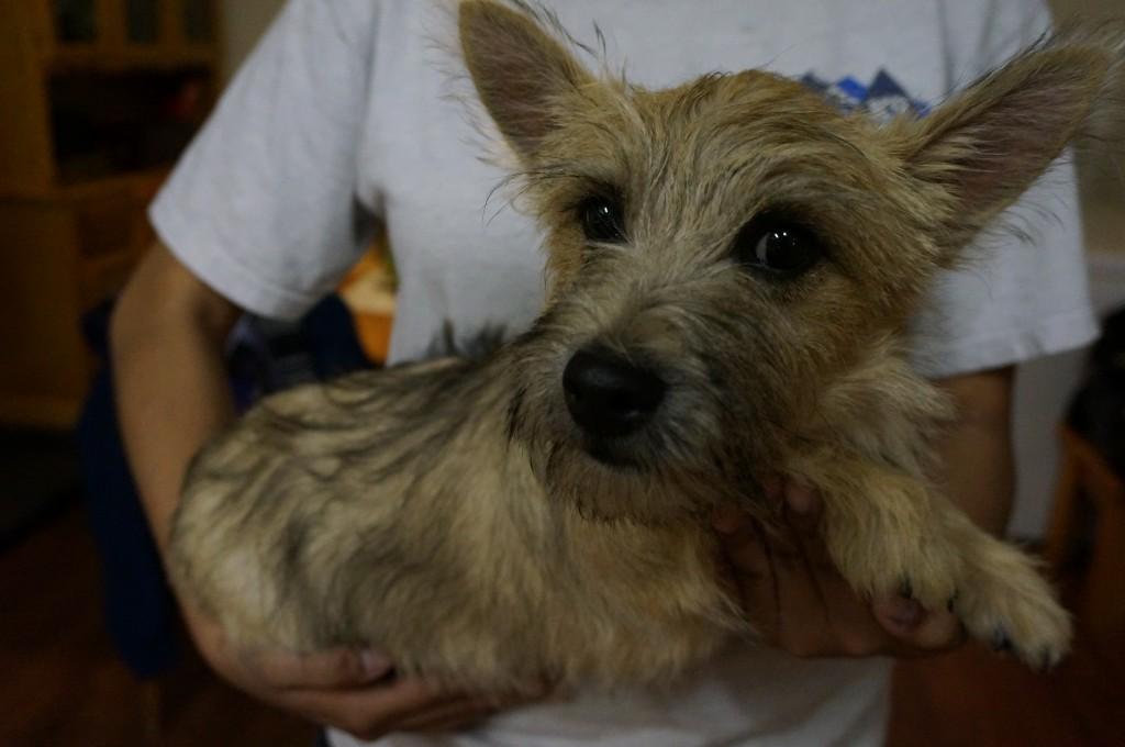 Trained Dogs For Sale Tucson Az