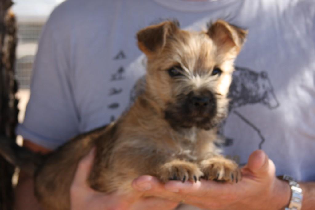 Dog Adoption Search Arizona