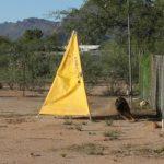 Stud dog in Tucson sable big