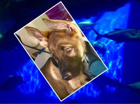 Zauberberg Puppy Testimonial